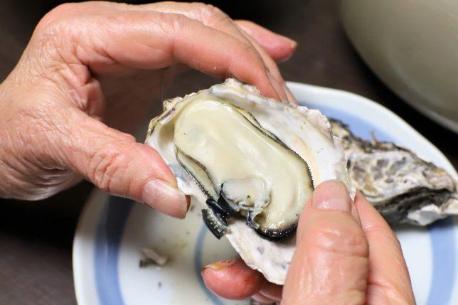 手で殻を開けた大きな蒸し牡蠣
