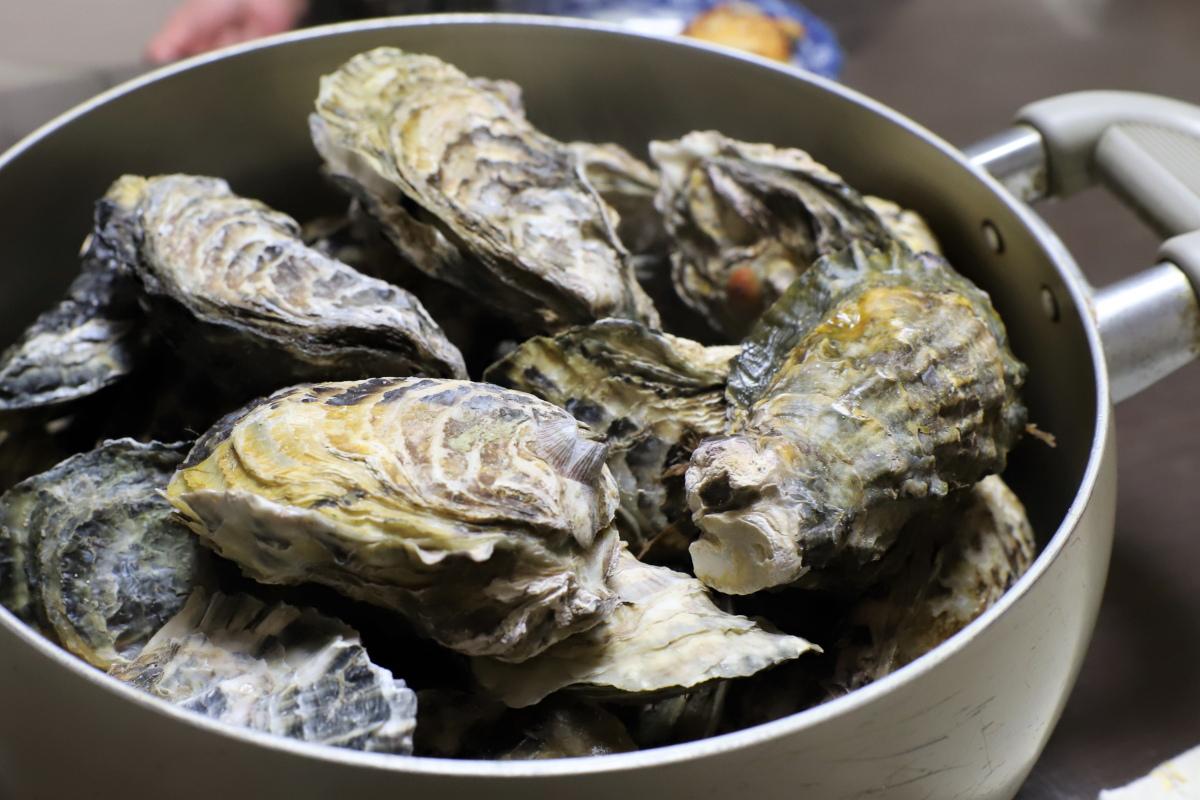 岡山の牡蠣を蒸したところ