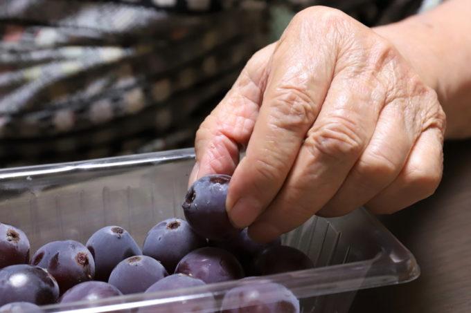 祖母(おばあ)が指先でブドウ(巨峰)を摘まんでいるところ